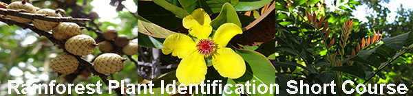 Plant Identification Short Course